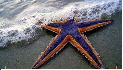 نجوم تتزين بها السماء، ونجوم تتزين بها الأرض ...