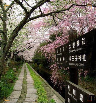 """هذا الطريق في مدينة كويوتو اليابانية اسمه \""""طريق الفلاسفة\"""""""
