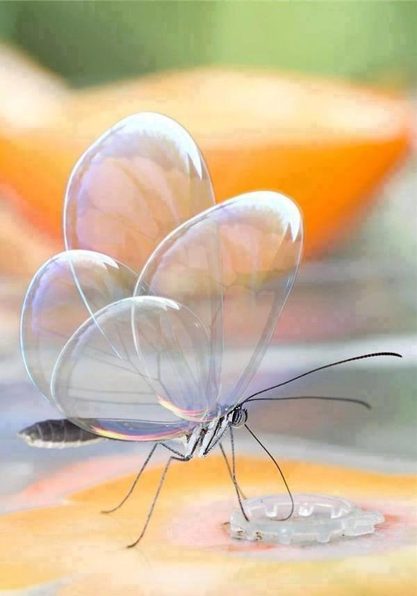 الفراشة الشفافة سبحان الله