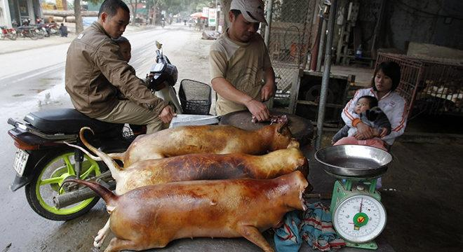 الصين تعاقب بالسجن من يأكل لحوم الحيونات.. النادرة