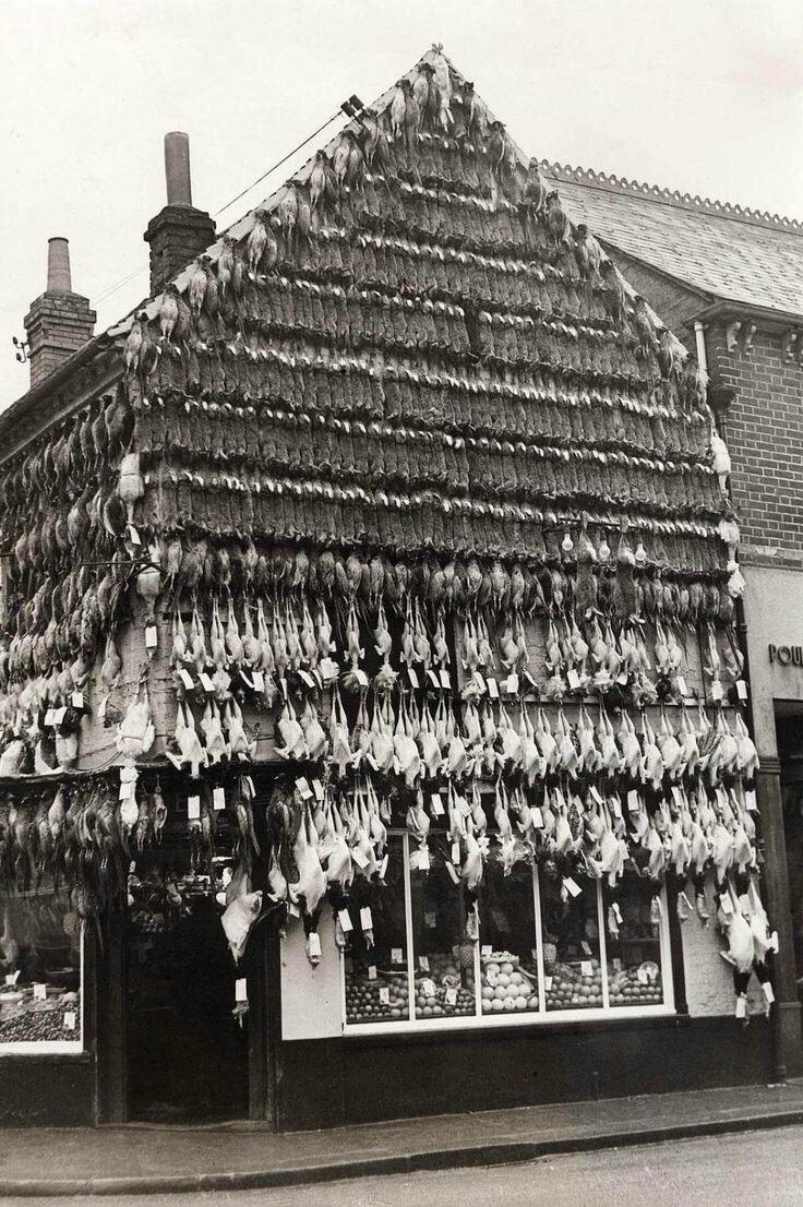محل بيع طيور في #لندن عام ١٩٣٧ #تاريخ