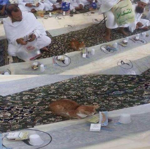 قطة تحجز لها مكان عند مائدة إفطار في الحرم المكي .. وبكل سكينة تنتظر مثل غيرها