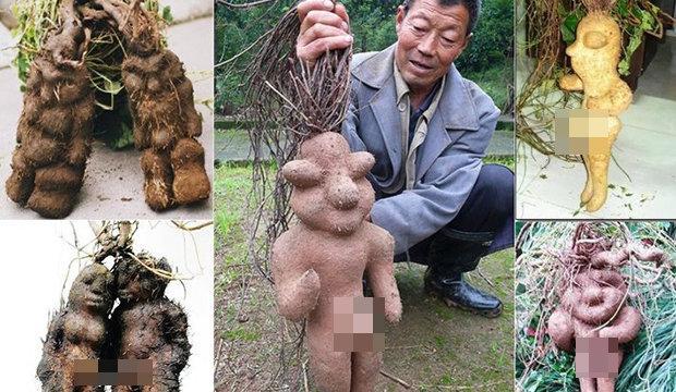 هل فعلا هناك شجرة صينية جذورها على شكل أجساد بشرية؟