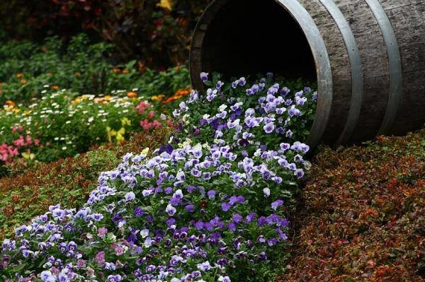 #منوعات طرق إبداعية ومذهلة في زراعة #الزهور  صوره1