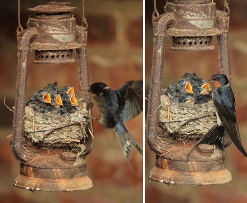 أغرب الأماكن لأعشاش الطيور صوره رقم 4 #غرد_بصوره