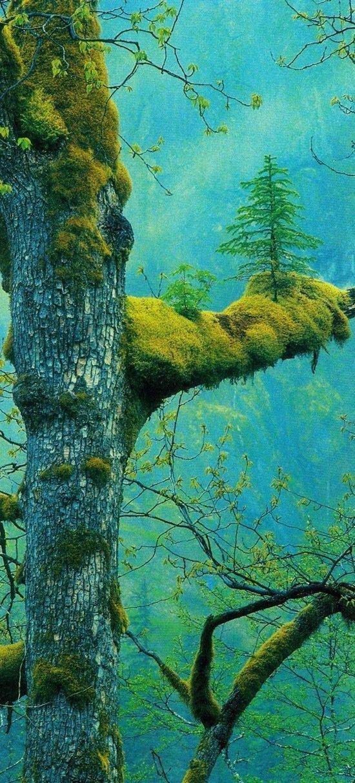 إبداع الخالق في جمال الطبيعة