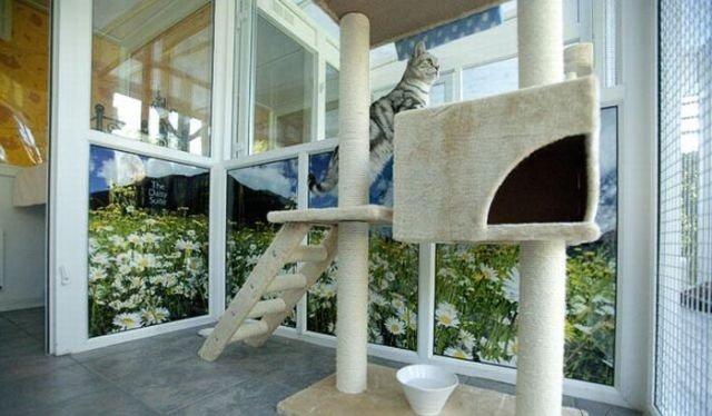 فندق خمس نجوم للقطط فقط #غرد_بصورة -صورة 4