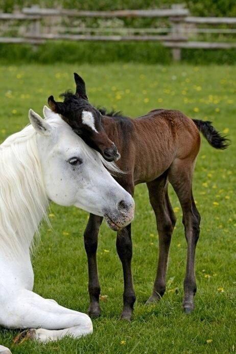 الأمومة عند الحيوانات - صورة ١