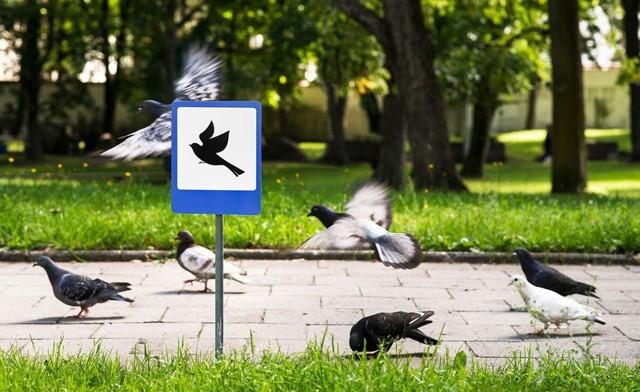 لوحات طريق صغيرة للتذكير #بحقوق_الحيوانات #غرد_بصوره صوره 4