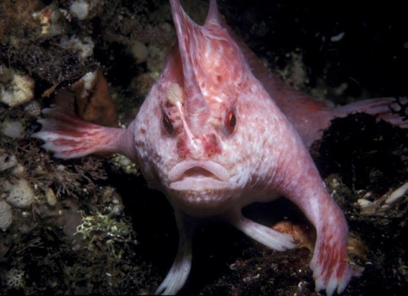 صور أغرب الأسماك التي تسير في قاع البحر #غرد_بصورة -صورة 1