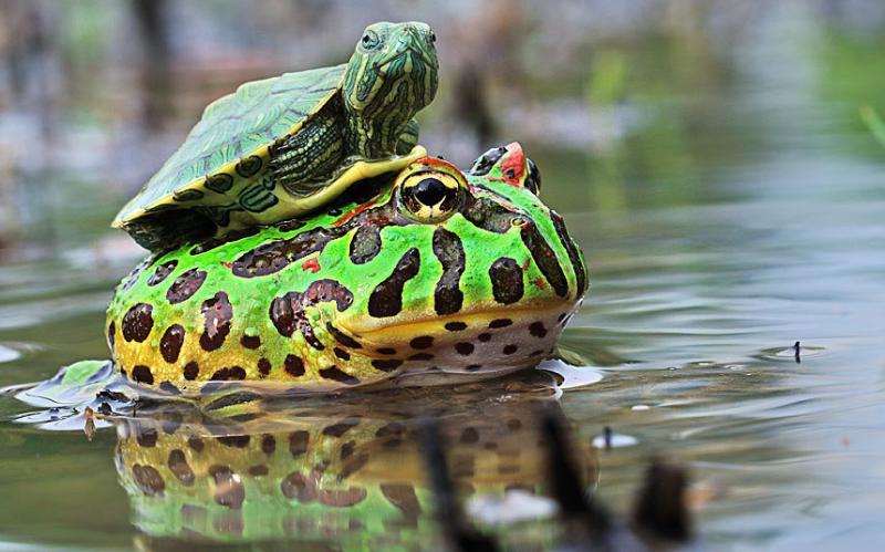 بالصور .. حيوانات تعيش على ظهر غيرها - صورة ٥