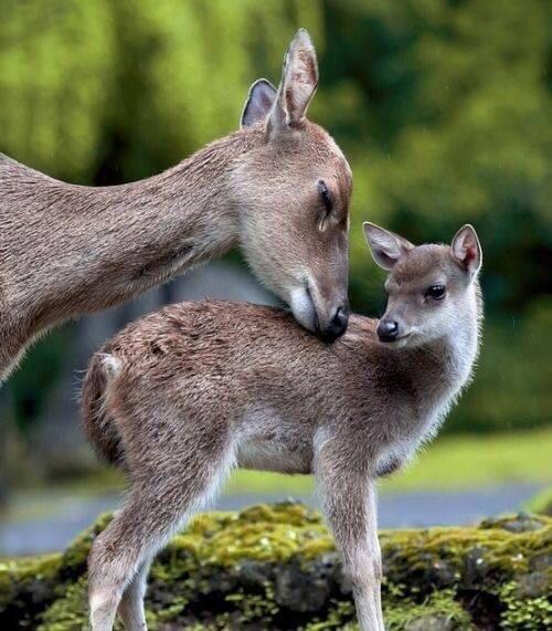الأمومة عند الحيوانات - صورة ٢