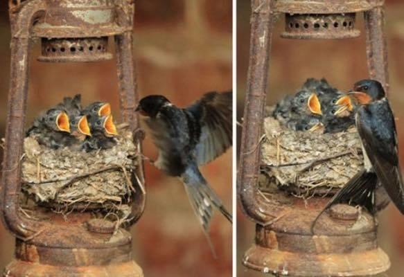أعشاش الطيور في أماكن غير متوقعة #غرد_بصورة -صورة 1