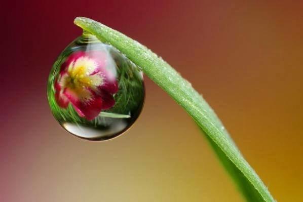 #منوعات الزهور و قطرات الندى - أجمل ما قد تراه #غرد_بصوره صوره 6