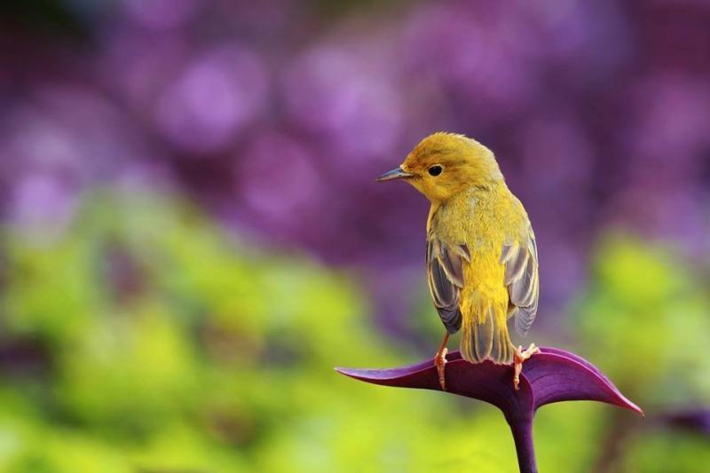 طيور ملونة جميلة #غرد_بصوره صوره رقم 2