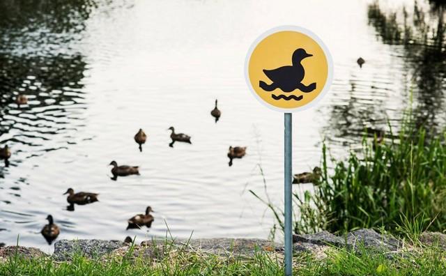 لوحات طريق صغيرة للتذكير #بحقوق_الحيوانات #غرد_بصوره صوره 5