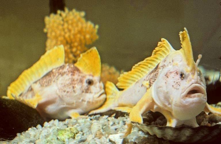 صور أغرب الأسماك التي تسير في قاع البحر #غرد_بصورة -صورة 3