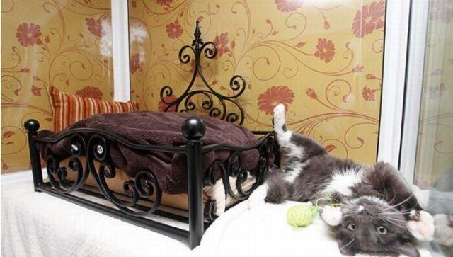فندق خمس نجوم للقطط فقط #غرد_بصورة -صورة2