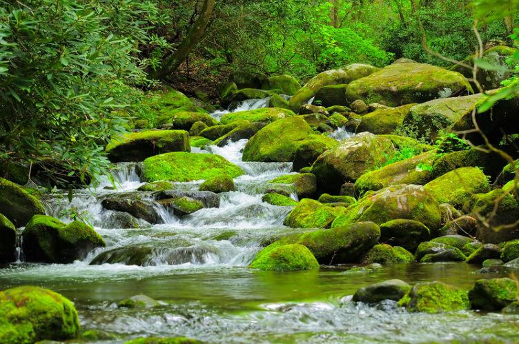 النهر الجاري وسط الغابات في #جورجيا