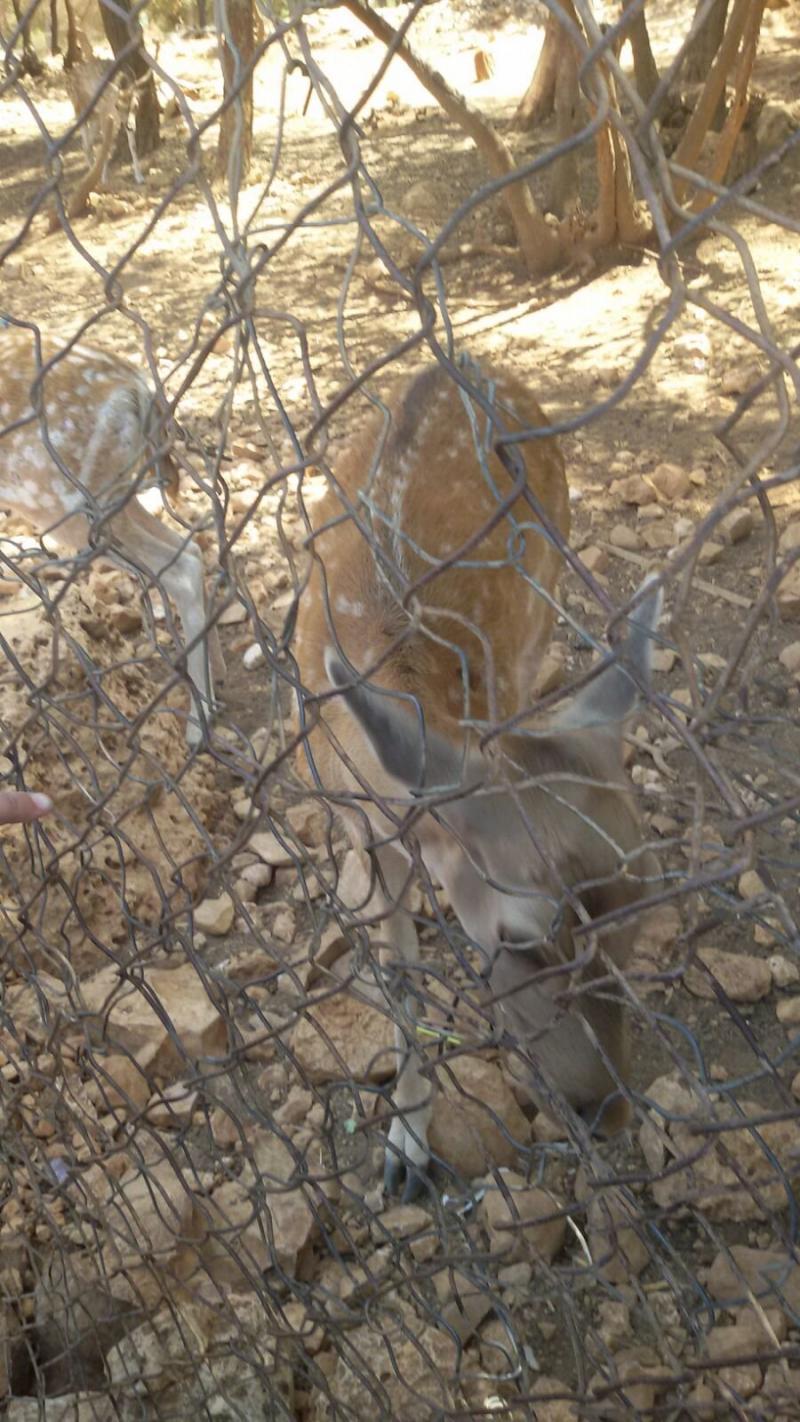 محمية دبين للغزلان #الأردن -صورة 2