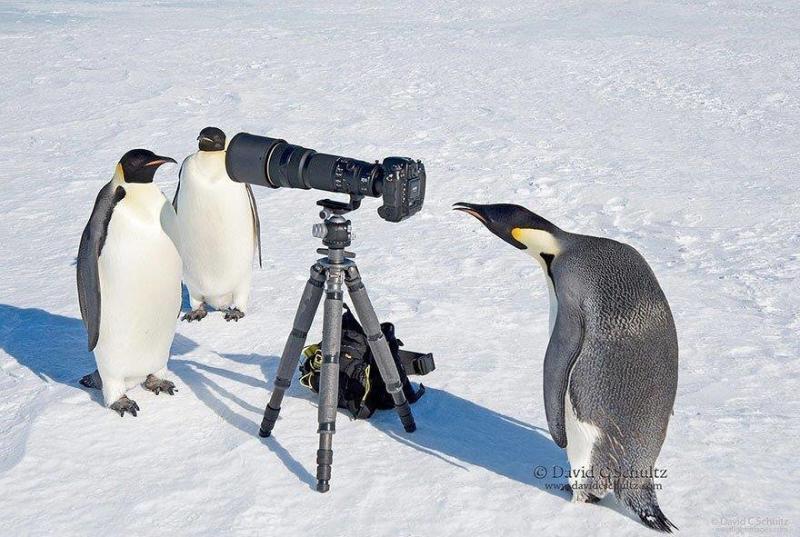 لقطات رائعة لحيوانات ترغب في احتراف التصوير #غرد_بصوره صوره رقم 6