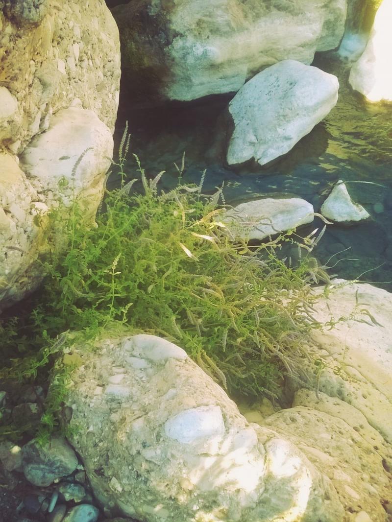 وادي الوالة #مأدبا #الأردن -صورة 20