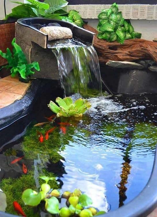من اجمل تصاميم احواض اسماك الزينة في فناء البيت #غرد_بصوره صوره رقم3