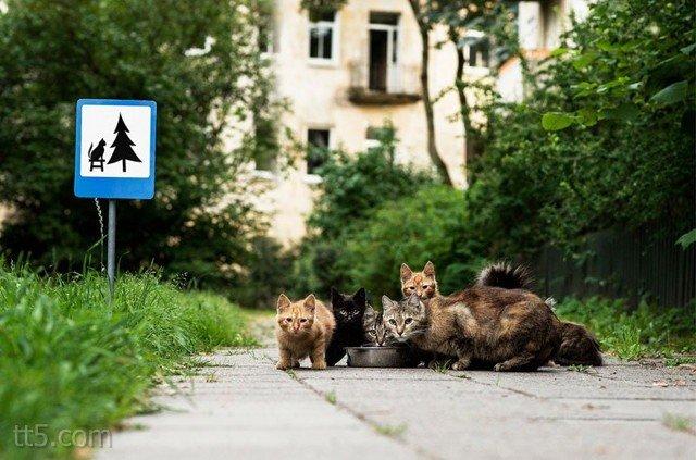 لوحات طريق صغيرة للتذكير #بحقوق_الحيوانات #غرد_بصوره صوره 1