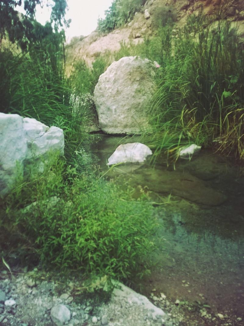 وادي الوالة #مأدبا #الأردن -صورة 8