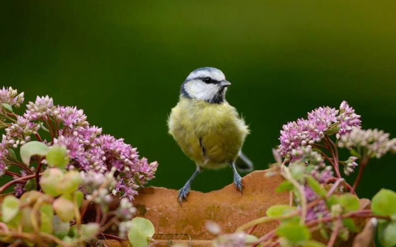 طيور ملونة جميلة #غرد_بصوره صوره رقم 3