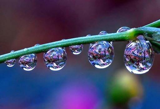 #منوعات الزهور و قطرات الندى - أجمل ما قد تراه #غرد_بصوره صوره 3