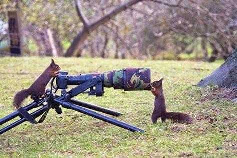 لقطات رائعة لحيوانات ترغب في احتراف التصوير #غرد_بصوره صوره رقم 4