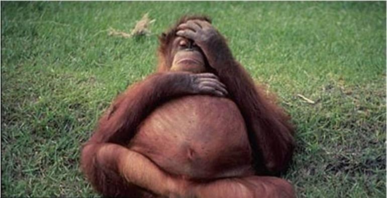 صوراً لمجموعة من الحيوانات في أشهرهم الأخيرة من الحمل صوره رقم 2
