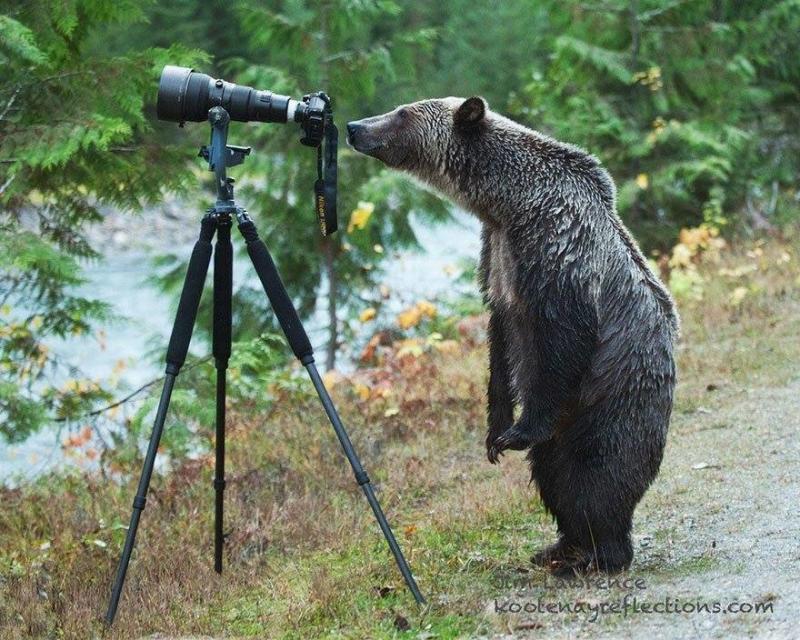 لقطات رائعة لحيوانات ترغب في احتراف التصوير #غرد_بصوره صوره رقم 2