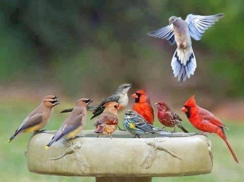النسخ الحقيقية لطيور لعبة #Angry_birds - صورة ٢