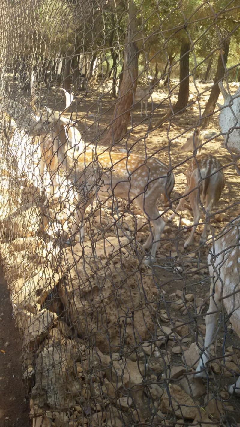 محمية دبين للغزلان #الأردن -صورة 5
