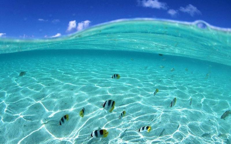 صور رائعة من العالم تحت سطح الماء #غرد_بصوره3