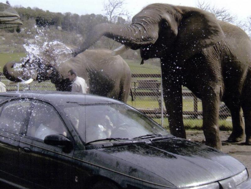 20 دولار تقوم الفيلة بغسل سيارتك #غرد_بصورة -صورة1