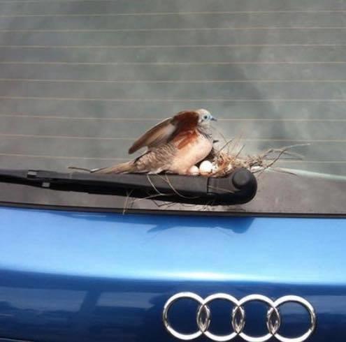 أعشاش الطيور في أماكن غير متوقعة #غرد_بصورة -صورة 2