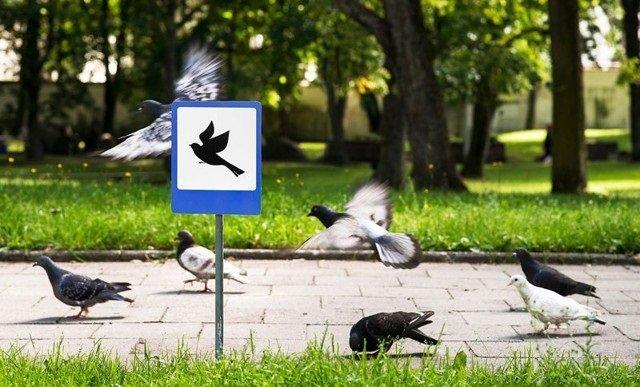 لوحات طريق صغيرة للتذكير بحقوق الحيوانات #غرد_بصورة -صورة 4