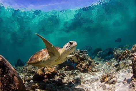 صور رائعة من العالم تحت سطح الماء #غرد_بصوره2