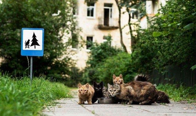 لوحات طريق صغيرة للتذكير بحقوق الحيوانات #غرد_بصورة -صورة 6