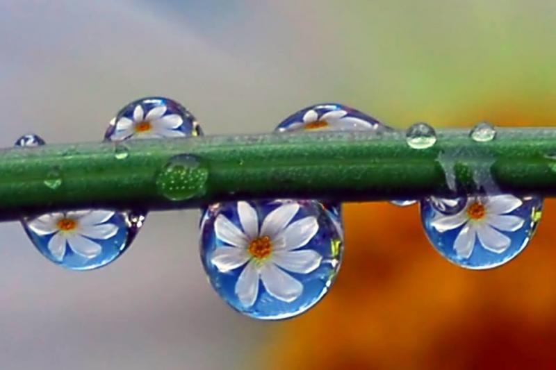 #منوعات الزهور و قطرات الندى - أجمل ما قد تراه #غرد_بصوره صوره 4