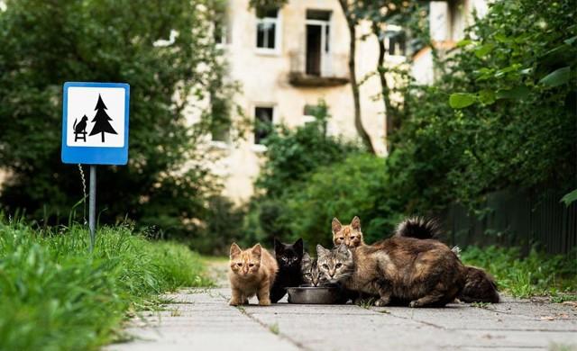 لوحات طريق صغيرة للتذكير #بحقوق_الحيوانات #غرد_بصوره صوره 6