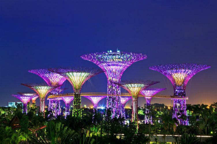 الأشجار المضيئة  #سنغافورة