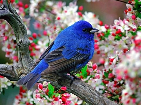 طيور ملونة جميلة #غرد_بصوره صوره رقم 1
