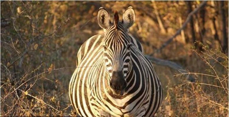 صوراً لمجموعة من الحيوانات في أشهرهم الأخيرة من الحمل صوره رقم 3