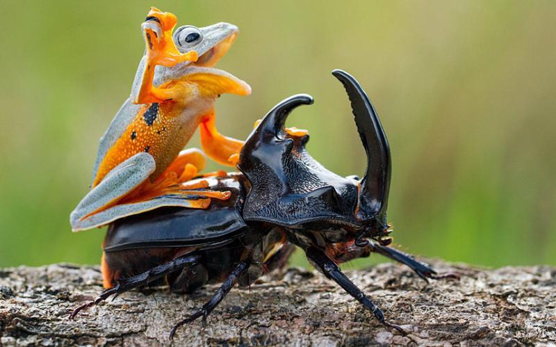 بالصور .. حيوانات تعيش على ظهر غيرها - صورة ٤