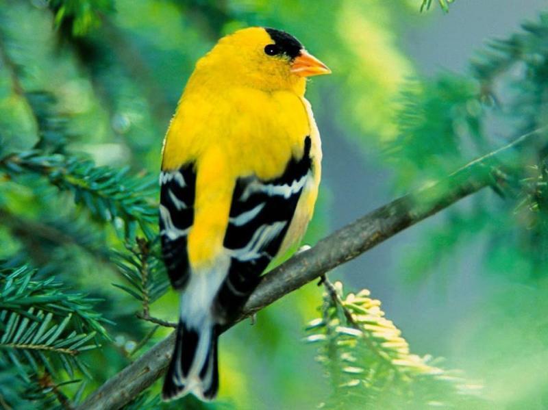طيور ملونة جميلة #غرد_بصوره صوره رقم 4