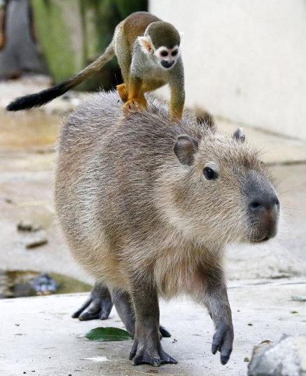 بالصور .. حيوانات تعيش على ظهر غيرها - صورة ١